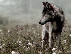 new#shifterromanceby author Wynter J. Bloom#wolf #werewolf