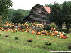 Harvest Scene of Pumpkins - Pumpkins Wallpapers : Outdoor Pumpkin Display 21 Free Thanksgiving Wallpaper, Fall Wallpaper Tumblr, Fall Photo Props, Pumpkin Wallpaper, Pumpkin Display, Autumn Display, Autumn Decorating, Decorating Ideas, Fall Photos