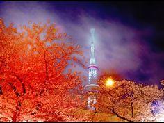 TOKYO JAPAN 東京・浅草・隅田川の桜(sakura) と東京スカイツリー Cherry Blossom of the Sumida R...