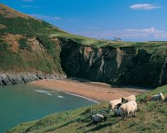 MWNT BEACH, WEST WALES - we saw dolphins in this bay