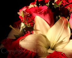 """""""After women, flowers are the most lovely thing God has given the world."""" . #christiandior . . . . #flowers #mothersday #thanksmom #roses #photography #flower #quote #print #photo  #available #lily #flowersofinstagram #flowerstagram #quoteoftheday #flowerlovers #nature #captured #photoart #floral #quoteoftheday #prints #DSMUSA #photographer #lilies #red #white #women #lovely  #bouquet #mothersday2020 Thanks Mom, Lilies, White Women, Photo Art, Jade, Bouquet, Roses, Quote, Prints"""