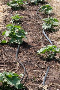uborka csepegtető öntözése Lombok, Gardening, Plants, Tips, Lawn And Garden, Plant, Planets, Horticulture