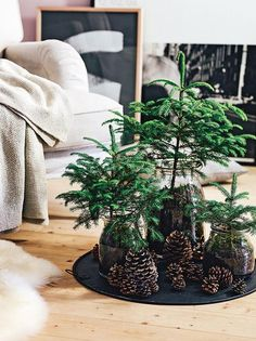 mini kerst boompjes op dienblad ... nodig * losse takken van de nobilis of / pinus - vaasjes - aarde - dennenappels - e.v.t . led draad verlichting ( batterij ) gedeeld door marjolein 131