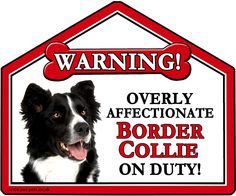 """Border Collie. These fun Warning Suction signs can be placed on Car, Caravan or House window and also on fridges and mirrors.  They are approximately 7"""" x 6"""" in size and make a great gift idea for family, friends and Dog lovers. Why not buy yourself one too!"""