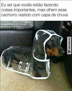 Fofurinha!!