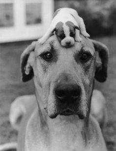 Puppy hat (circa 1950) - Photo by Kurt Hutton