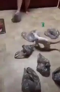 Cute Animal Videos, Funny Animal Pictures, Cute Funny Animals, Cute Baby Animals, Funny Cute, Animals And Pets, Cute Cats, Hilarious, Funny Cat Videos
