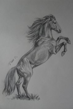horse drawings by WhySoWhite.deviantart.com on @deviantART