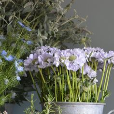 Scabious love on this Wedding Wednesday. I just adore their frilly petals like ruffles of fabric under a ballerinas skirt. I also love the colours from the palest lilac to deep pinks of raspberry scoop. We are also 'trying' to grow them in the cutting garden. Any tips? These beauties are purchased from the lovely @dutchmastersflowerwholesale