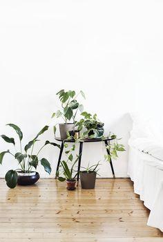 plants. white background.