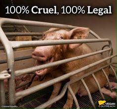 100% Cruel, 100% Legal