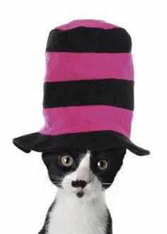 http://www.kaartwereld.nl/img/cards/350x350/blanco-kaarten/animal-fun-kaart-met-kat-hoge-hoed-voorkant.jpg
