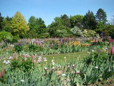 Schriener's Iris Gardens near Salem, OR.  May 2012