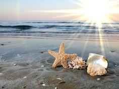 Sunshine and Seashells <3