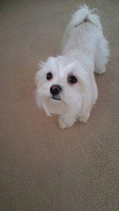 My boy Teddy