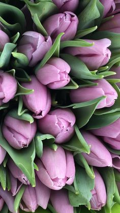 Good Photo Tulip fond ecran Ideas Long dwell the tulip ! Seed this particular extremely colorful gemstone mobile phone . a stunning display in Purple Tulips, Tulips Flowers, Flowers Nature, Spring Flowers, Paper Flowers, Beautiful Flowers, Flower Background Wallpaper, Flower Phone Wallpaper, Flower Backgrounds