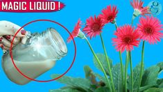 A cocktail secret liquid fertilizer as a foliar spray will instantly boost flowering and plant growth. This organic fertilizer recipe will not only make your. Compost Tea, Garden Compost, Garden Pests, Garden Fertilizers, Vegetable Garden, Garden Planters, Liquid Fertilizer, Organic Fertilizer, Fall Vegetables To Plant