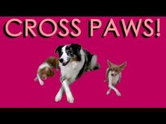 This is a redone video on how to teach your dog to cross her paws, that I made a couple years ago- it is now a higher resolution and with new clips :) Visit ...
