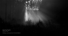 .. by hrandrusallikas  mist forest sun black and white estonia estonian landscape ..... hrandrusallikas