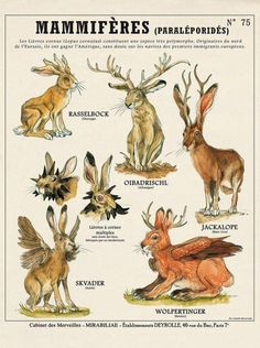 Sold out soon: Jackalope / horny bunny print – cabinet of curiosities by the artist Camille Renversade Deyrolle poster Wolpertinger ! Magic Creatures, Mythical Creatures Art, Mythological Creatures, Spiderwick, Poster Print, Creature Design, Fantastic Beasts, Animal Drawings, Wolf Drawings