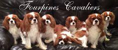 Fourpines Cavaliers