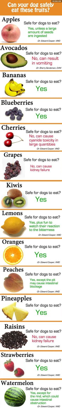 Food that dogs can and can not eat!