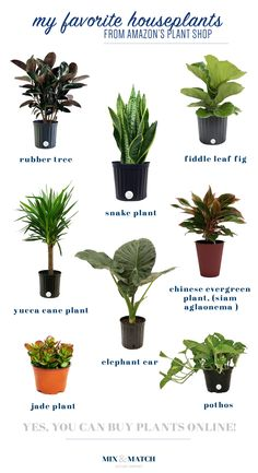 House Plants 67776 Did you know you can buy indoor plants online? Buy Indoor Plants Online, Best Indoor Plants, Indoor Plants Low Light, Outdoor Plants, Low Light Houseplants, Yucca Plant Indoor, Indoor Plants Names, Indoor Plants Clean Air, Indoor Herbs