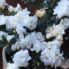BOMMM DIA flores do meu dia! Haha que o dia de vocês seja lindo e abençoado, meus amores!!!  #MarianaSaad #MariNoInterior #TimeDeLeitorasLindas