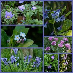 Border aanleggen blauwe bloemen - border aanleggen met vaste planten en sierheesters op kleur