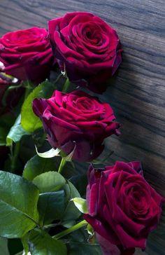 Easy Diy Garden Projects You'll Love Beautiful Rose Flowers, Red Flowers, Beautiful Flowers, Red Flower Bouquet, Foto Rose, Rose Flower Wallpaper, Belle Plante, Rose Pictures, Diy Garden Projects