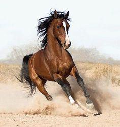 caballos punto cruz   Aprender manualidades es facilisimo.com