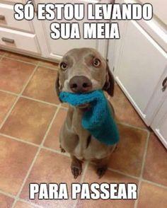 Sei..Sei...! hehe #petmeupet #cachorro #amoanimais #cachorroetudodebom