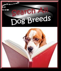 Dog Breeds Dog Training Books, Dog Breeds List, Free Dogs, New Puppy, Pet Tips, Puppies, Pets, Dog Stuff, Animals
