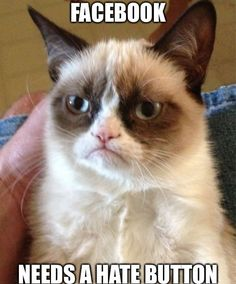 A Grumpy Cat meme. Caption your own images or memes with our Meme Generator. Cute Cat Memes, Cat Puns, Funny Cats, Funny Animals, Funniest Animals, Happy Birthday Animals, Cat Birthday, Birthday Gifs, Birthday Stuff