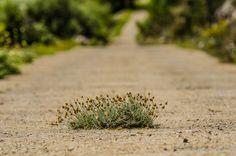 How To Dry Basil, Dandelion, Herbs, Landscape, Flowers, Plants, Food, Dandelions, Florals