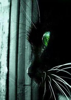 =^..^= I Just Love Black Cats!