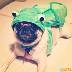 The Cutest Pets on Twitter This Week! - GREEN WITH ENVY - Twitter Pics : People.com