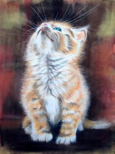 """Please Pick Me Up"" par Paul Knight Knight Art, Cat Sketch, Cat Pose, Watercolor Cat, Art Challenge, Cat Drawing, Fractal Art, Animal Paintings, Beautiful Cats"