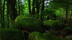 Forêt, Arbres, Mousse, Végétation