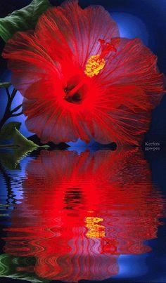 Flores, bonitas, animadas flores, rosas, Keefers gif por Keefers_ | Photobucket