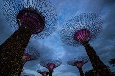 https://flic.kr/p/qEGdvH | Super Trees, Gardens By The Bay, Singapore | Super Trees, Gardens By The Bay, Singapore | 2016/4/21 pm 02:06:05 | #花草自然系列