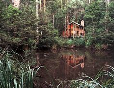 Woodlands Rainforest Retreat Narbethong Nestled in privacy in the Toolangi State Forest, Woodlands Rainforest Retreat offers luxurious, self-contained cottages. Wake up to stunning lake and mountain views, enjoy a spa bath or relax by the fireplace.