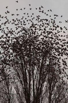 The Birds III by Erwin Bolwidt