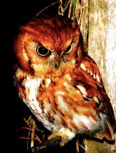 owls | via Facebook