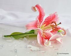 Lillies - the flowers I held when I first walked down the isle 24 years ago!!!  Breathtaking!!!
