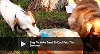 Easy to Make Treat to Cool Pets This Summer