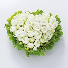★Gateau de Rose (ガトー・ドゥ・ローズ:バラのケーキ)  「純潔」の花言葉を持つ真っ白なバラを、ハート型にデコレーションしました。まるでケーキのようなアレンジメントです。甘くてやさしい気持ちをお届けします。女性の方への贈りものにおすすめ。8,400円(税込み) $100  #kusakanmuri