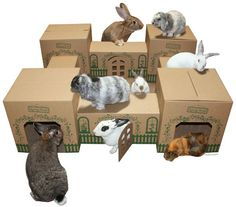 Cats & Rabbits & More - Adoptions ~ Education ~ Pet Products - Hopper Hideaway