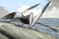 Dorygnathus                                                                                                                                                                                 More