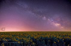 milky way over sunflower field.jpg  Camera: NIKON D810 Focal Length: 14mm Shutter Speed: 25sec Aperture: f/2.8 ISO/Film: 3200  Image credit: http://ift.tt/29tCBlN Visit http://ift.tt/1qPHad3 and read how to see the #MilkyWay  #Galaxy #Stars #Nightscape #Astrophotography